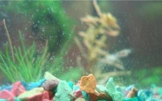 Как почистить аквариум в домашних условиях?