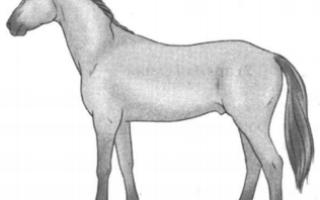 Рассмотрите фотографию лошади породы чистокровная верховая