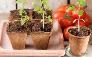 Когда сажать рассаду в Подмосковье: сроки посадки томатов