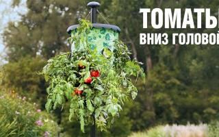 Помидоры вверх ногами в пластиковой бутылке, видео: выращивание томатов вниз головой