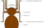 Дыхательная система паука крестовика — органи дихання павука хрестовика