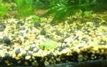 Сколько кипятить грунт для аквариума?