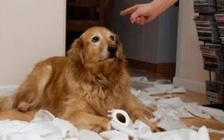 Можно ли бить щенка в целях воспитания: собаку бьют
