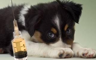 Какие прививки делают щенкам немецкой овчарки?