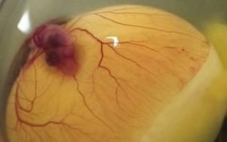 Как узнать яйцо оплодотворенное или нет: проверка яиц на зародыш