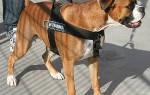 Для чего нужна шлейка для собак, виды шлеек