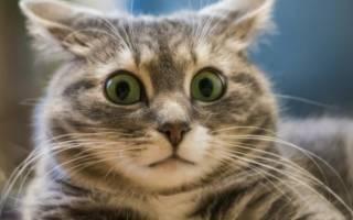 Кот чего то боится и прячется: пугливый котенок, что делать?