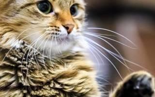Если кот кусается что это значит