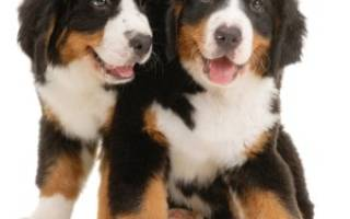 Уход за собаками в домашних условиях, как ухаживать за собачкой?