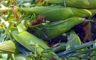 Как размножается кукуруза в дикой природе?