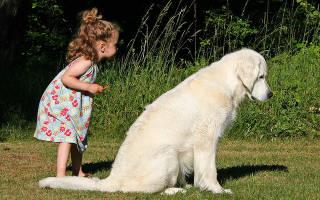 Собака нянька для детей порода